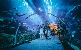 Aquarium>