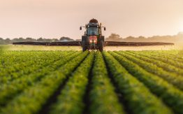 Soybean field>